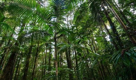 Palm Grove walk forest, Willi Willi National Park. Photo: John Spencer