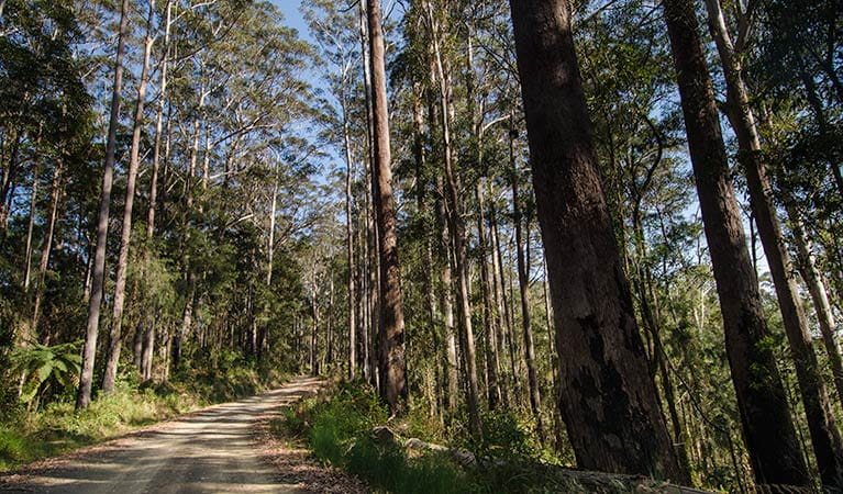 Forest road, Willi Willi National Park. Photo: John Spencer © DPIE