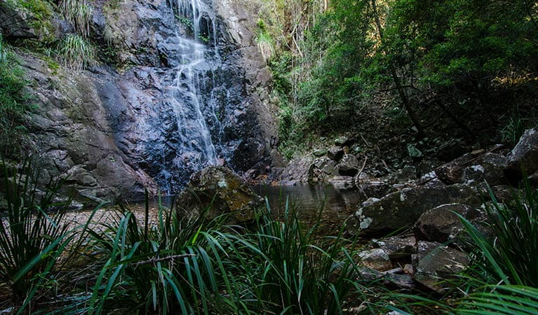 Waterfall walk cascade, Willi Willi National Park. Photo: John Spencer