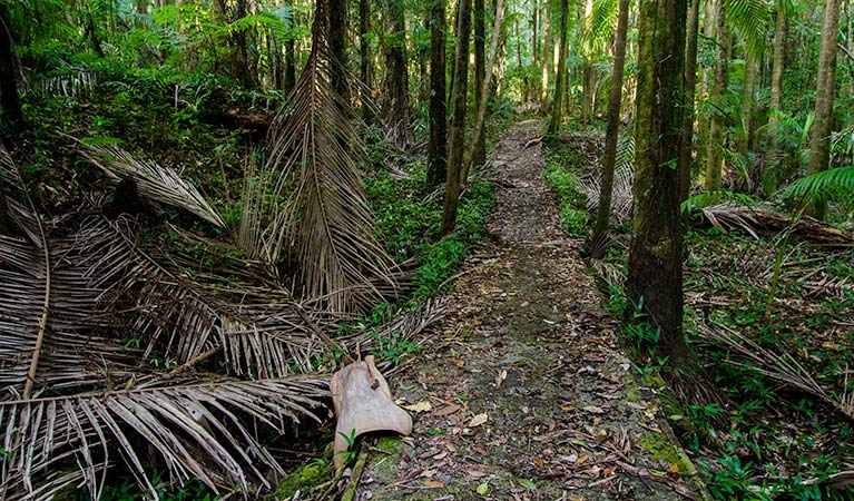 Waterfall walk path, Willi Willi National Park. Photo: John Spencer