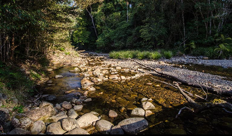 Wilson River picnic area stream, Willi Willi National Park. Photo: John Spencer