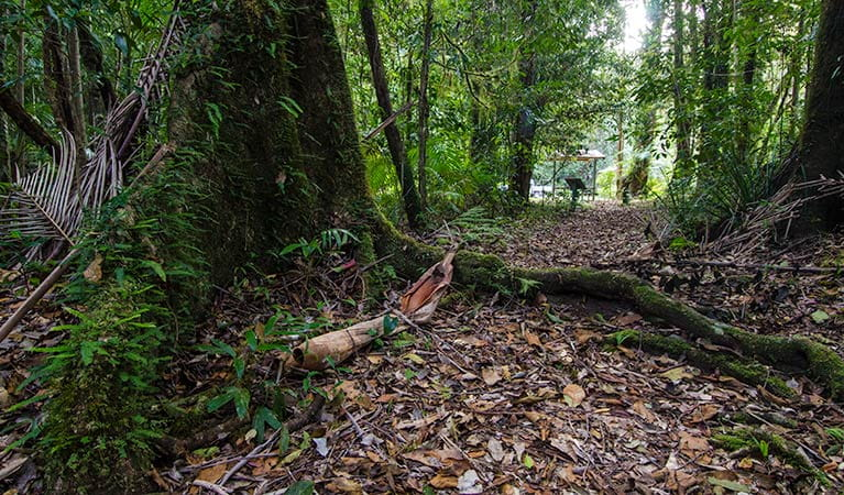 Wilson River picnic area tree, Willi Willi National Park. Photo: John Spencer