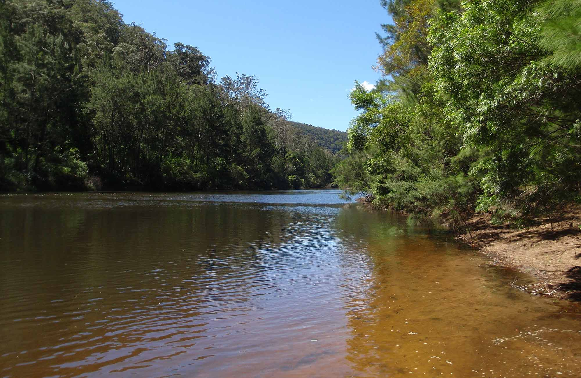 Colo River, Wollemi National Park. Photo: OEH