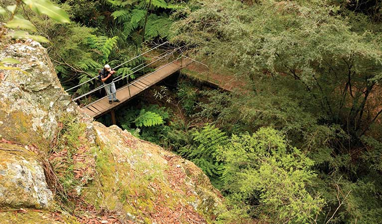 A walker stops on a bridge over a gully, Glow Worm Tunnel walking track, Wollemi National Park. Photo: Rosie Nicolai.