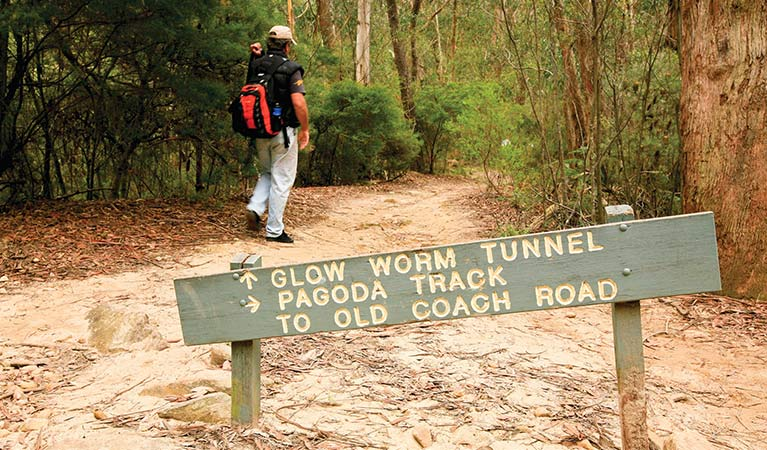 A walker passes signage along Glow Worm Tunnel walking track, Wollemi National Park. Photo: Rosie Nicolai.