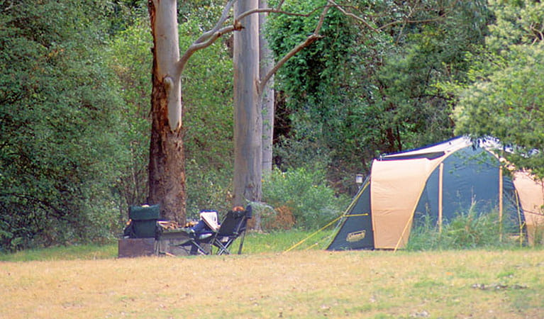Wheeny Creek campground, Wollemi National Park. Photo: Steve Alton