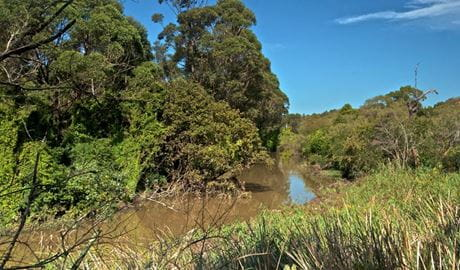 Wolli Creek track, Wolli Creek Regional Park. Photo: John Spencer