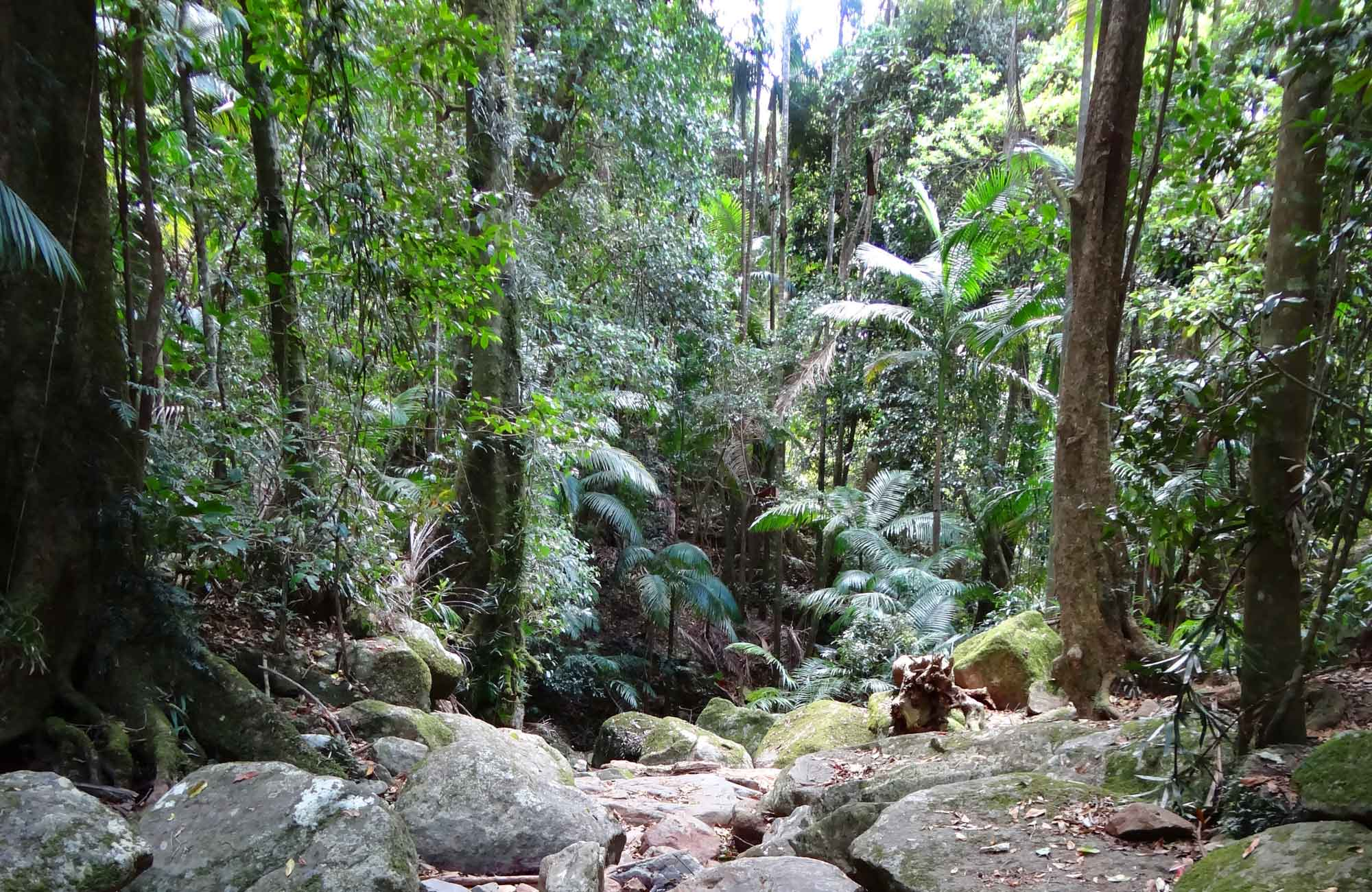 Lyrebird track, Wollumbin National Park. Photo: D Hofmeyer.
