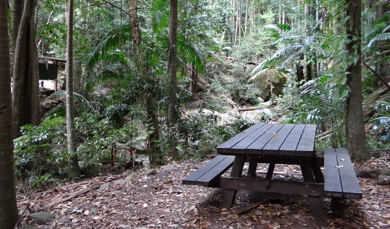 Lyrebird track picnic table, Wollumbin National Park. Photo: D Hofmeyer.