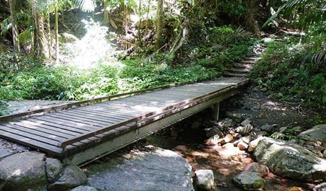 A timber bridge crosses Breakfast Creek along Lyrebird track, Wollumbin National Park. Photo: D Hofmeyer.