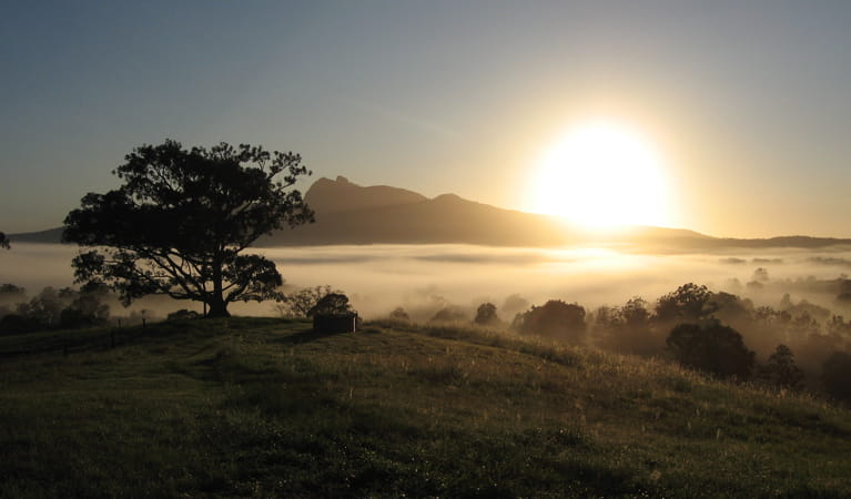Sunrise, Wollumbin National Park. Photo: S Foreman.