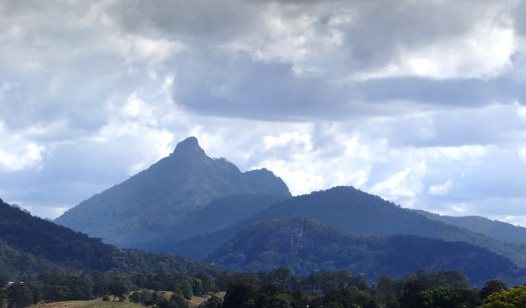Wollumbin, Wollumbin National Park. Photo: D Hofmeyer.
