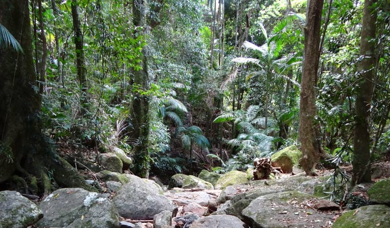 Lyrebird track, Wollumbin National Park. Photo: D Hofmeyer