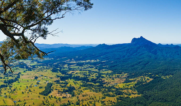 View of Wollumbin (Mount Warning) from Blackbutt lookout picnic area, Border Ranges National Park. Photo: Stephen King/OEH
