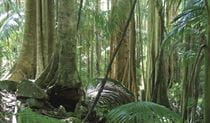 Rainforest vegetation at the start of Wollumbin (Mount Warning) summit track. Photo: Barry Collier © Barry Collier