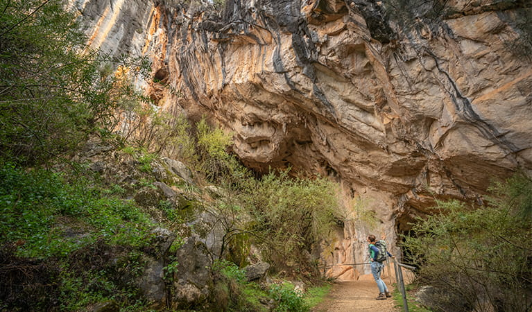 A person looking at the cave formations outside the Fig Tree Cave, Wombeyan Karst Conservation Reserve. Photo: John Spencer/OEH