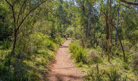 Mares Forest Creek walking track, Wombeyan Karst Conservation Reserve. Photo: Steve Babka