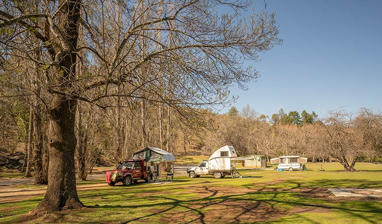 Campervans and camper trailers at Wombeyan Caves campground. Photo: OEH/John Spencer
