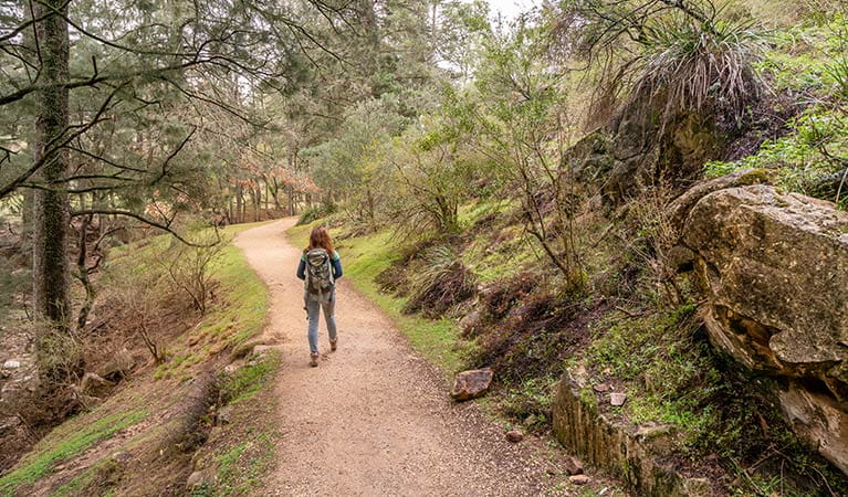 Woman hiking on Victoria Arch walking track towards Wombeyan picnic area. Photo: OEH/John Spencer