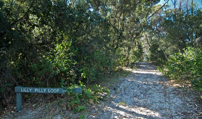 Lillypilly loop track, Wyrrabalong National Park. Photo: John Spencer