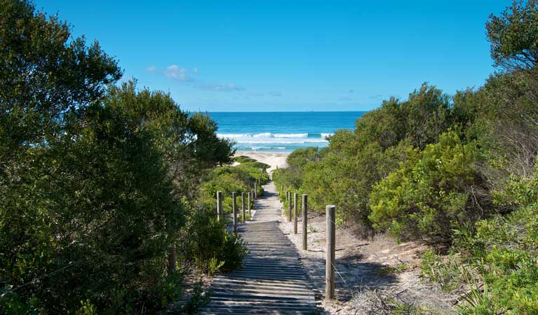 Track to Pelican Beach. Photo: John Spencer