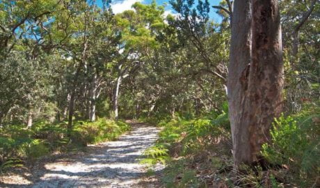 Red gum trail, Wyrrabalong National Park. Photo: John Spencer
