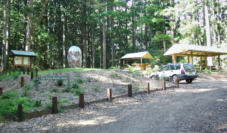 The Pines picnic area, Yarriabini National Park. Photo: A Turbill/NSW Government