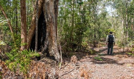 Circuit Flat walking track, Yengo National Park. Photo: John Spencer