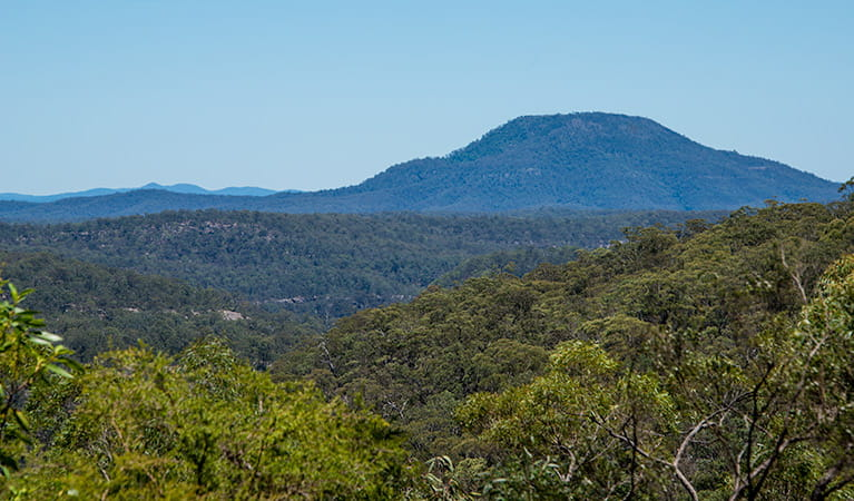 Finchley campground, Yengo National Park. Photo: John Spencer/NSW Government