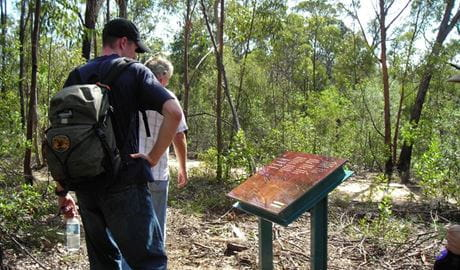 Finchley Cultural Walk, Yengo National Park. Photo: Susan Davis/NSW Government
