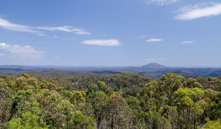Finchley lookout, Yengo National Park. Photo: John Spencer