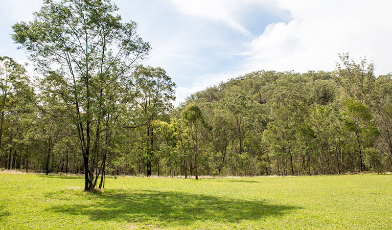 Mountain Arm campground, Yengo National Park. Photo: John Spencer