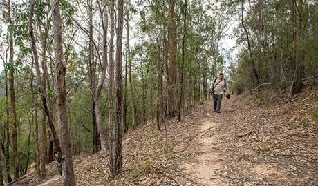 Yango walking track, Yengo National Park. Photo: John Spencer