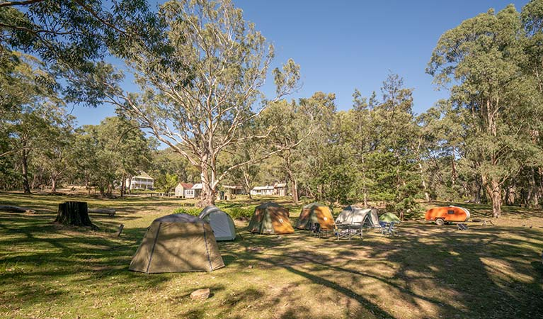 A row of tents at Private Town campground in Yerranderie Private Town, Yerranderie Regional Park. Photo: John Spencer/OEH