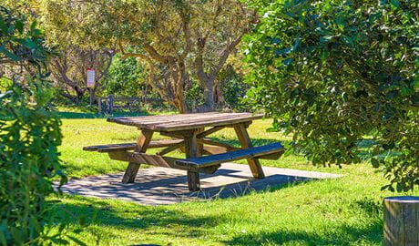Picnic tables in Angourie Bay picnic area. Photo: Rob Cleary