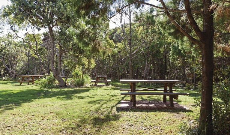 Picnic facilities at Illaroo group camping area, Yuraygir National Park. Photo: R Cleary Seen Australia/OEH