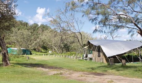 Tents at Pebbly Beach campground. Photo: Rob Cleary/DPIE