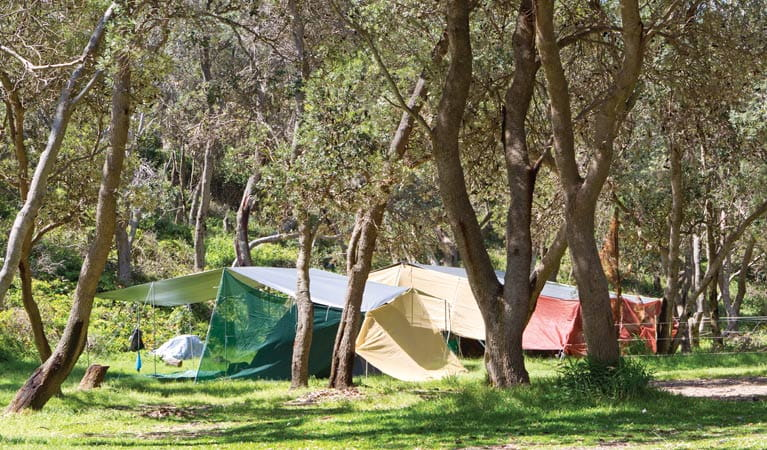 Tents at Pebbly Beach campground, Yuraygir National Park. Photo: Rob Cleary
