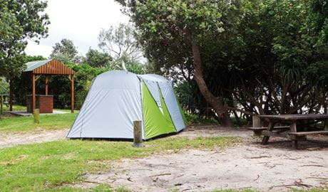 Tents at Sandon River campground, Yuraygir National Park. Photo: Rob Cleary/DPIE