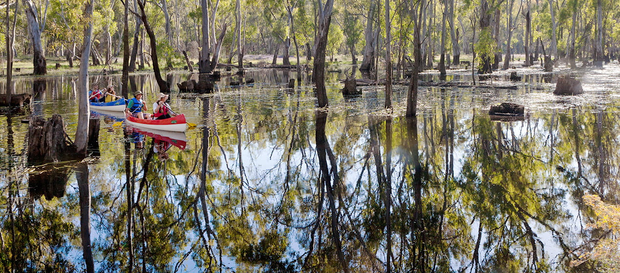Canoeing near Barooga, Murray Valley National Park. Photo: David Finnegan/OEH