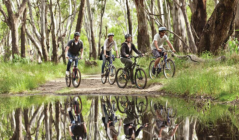 A group of people cycling in the Murray River region. Photo: David Finnegan © DPIE