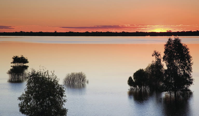 Murray Riverina yanga sunset. Photo: W.Bradbury