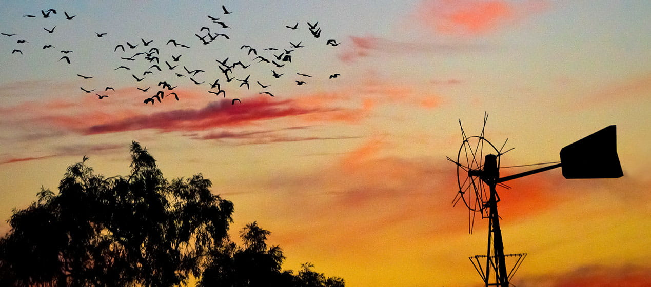 Sunset windmill and birds. Mount Wood area of Sturt National Park. Photo: John Spencer &copy: DPIE