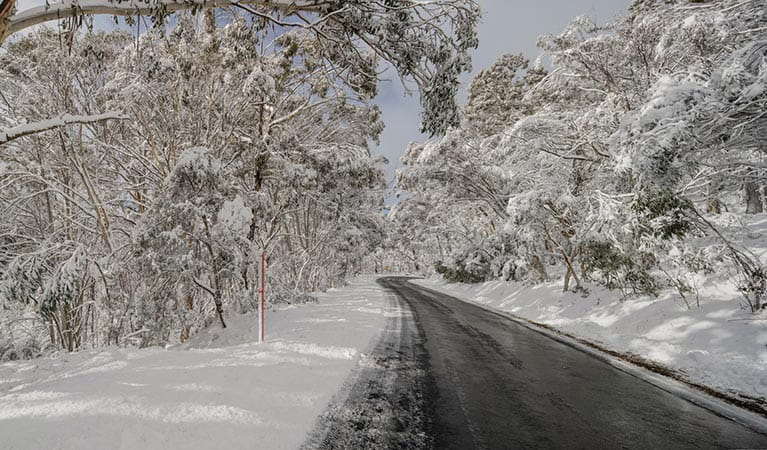 Snow covering the side of the road in Kosciuszko National Park. Photo: Murray Vanderveer/DPIE