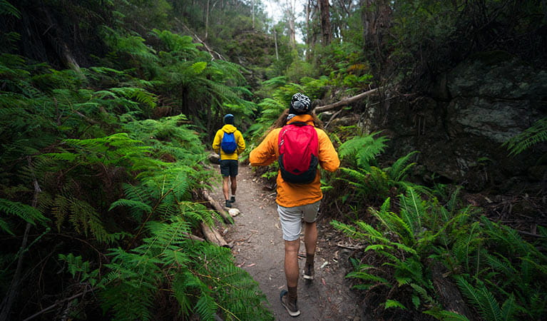Bushwalkers in Wollemi National Park. Daniel Tran/DPIE