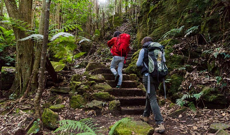 Bushwalkers in Blue Mountains National Park. Simone Cottrell/DPIE