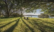 Harbour views through the trees at Bottle and Glass Point, Sydney Harbour National Park. Photo: John Spencer/DPIE