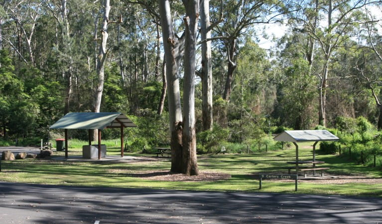 Carter Creek picnic area in Lane Cove National Park, with tall trees and a large grassy area.  Photo: Debby McGerty