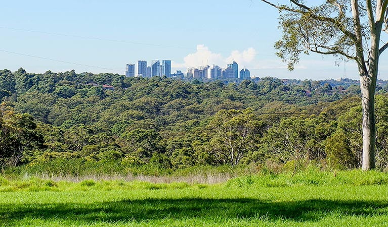 View of the Chatswood skyline from Tunks Hill picnic area in Lane Cove National Park. Photo: OEH