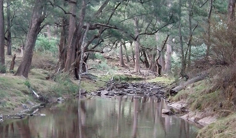 Sink campground, Abercrombie River National Park. Photo: J Bros